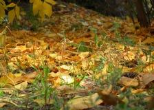 下落的叶子在阳光下 库存照片