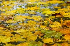 下落的叶子在水中 库存图片