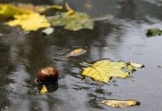 下落的叶子在水中 免版税库存图片