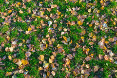 下落的叶子在绿草在秋天说谎 免版税库存图片