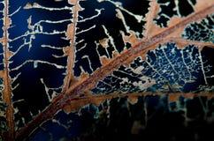 下落的叶子朽烂随着时间的推移 免版税库存图片