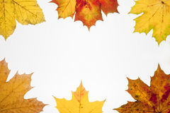下落的叶子框架有地方的您的文本的 库存图片