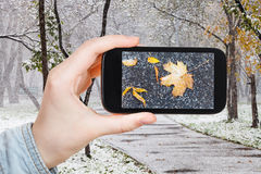 下落的叶子的图片在雪的在都市公园 库存图片