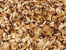 从下落的叶子的秋天背景 免版税库存图片