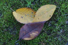 下落的叶子秋天 库存图片