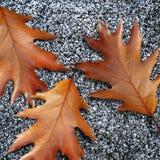 下落的叶子 免版税库存照片