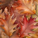 下落的叶子 库存照片