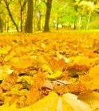 下落的叶子 免版税库存图片