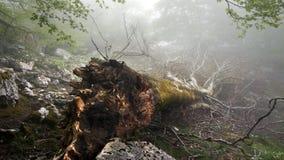 下落的和被连根拔的树 库存照片