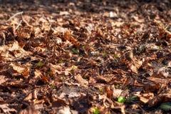 下落的干燥叶子在地面上说谎 免版税库存照片