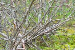 下落的干燥树 库存照片