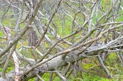下落的干燥树 免版税库存照片