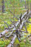 下落的干燥树 免版税库存图片