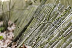 下落的木篱芭 免版税库存照片