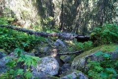 下落的树下来小山 免版税库存照片