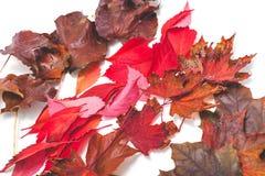 下落的树几行在白色背景离开 免版税库存照片