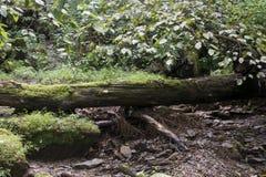 下落的树和小小河 免版税库存照片