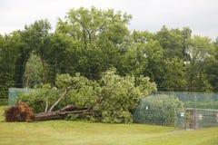 下落的树在恶劣的天气和龙卷风后损坏了输电线在阿尔斯特县,纽约 免版税库存照片