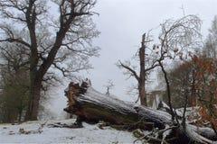 下落的树在森林地 免版税库存图片