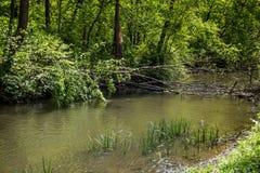 下落的树在森林河 免版税库存图片