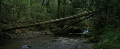 下落的树在横跨河的森林里 免版税库存图片