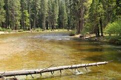 下落的树在河 免版税库存图片