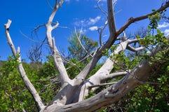 下落的树在蓝天下 免版税库存图片
