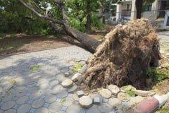 下落的树在走的途中损坏了由自然风暴 库存照片