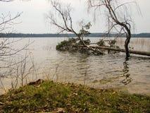 下落的树在飓风以后的湖 免版税库存照片