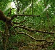 下落的树在绿色森林里 免版税库存图片