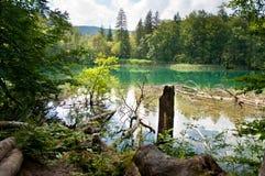下落的树干和分支在湖的底部 免版税库存照片