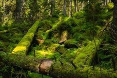 下落的树干在森林里 免版税库存照片