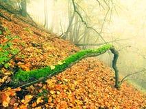 下落的树干在金黄秋天森林,旅游石小径里 残破的腐烂的树 免版税图库摄影