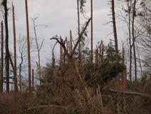 下落的树年龄 免版税库存照片
