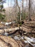 下落的树桥梁 库存图片