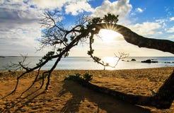 下落的树海滩 库存照片