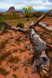 下落的树犹他沙漠野马小山在背景中 免版税库存照片