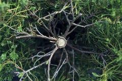 下落的树,活和绿色 库存图片