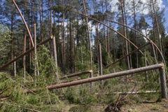 下落的树,风暴损伤,意外收获 免版税库存照片