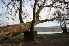 下落的树 免版税库存图片