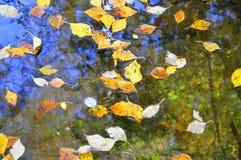 下落的桦树叶子在水中 免版税库存图片