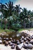 下落的椰子和河沙滩的有棕榈背景 免版税库存照片