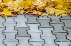 下落的槭树叶子创造性地在一个混凝土路面被折叠 库存图片