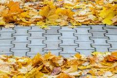 下落的槭树叶子创造性地在一个混凝土路面被折叠 库存照片