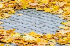 下落的槭树叶子创造性地在一个混凝土路面被折叠 免版税库存图片