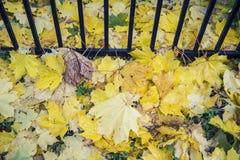 下落的槭树叶子在绿草说谎在金属篱芭附近 库存图片