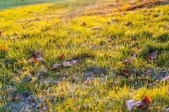 下落的槭树叶子 免版税库存图片