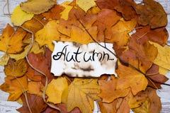 下落的秋叶五颜六色和明亮的背景  题字是在羊皮纸的秋天 秋天概念查出的白色 免版税库存图片
