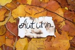 下落的秋叶五颜六色和明亮的背景  题字是在羊皮纸的秋天 秋天概念查出的白色 库存图片