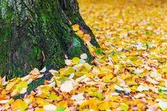 下落的秋叶在公园,软的焦点,浅景深 免版税图库摄影